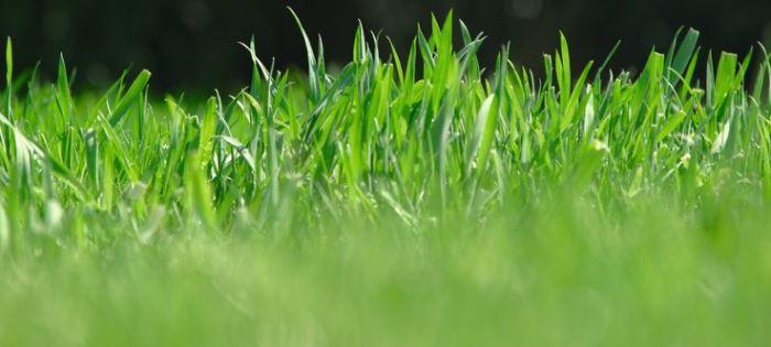Javaslatok a fű károsodása esetén