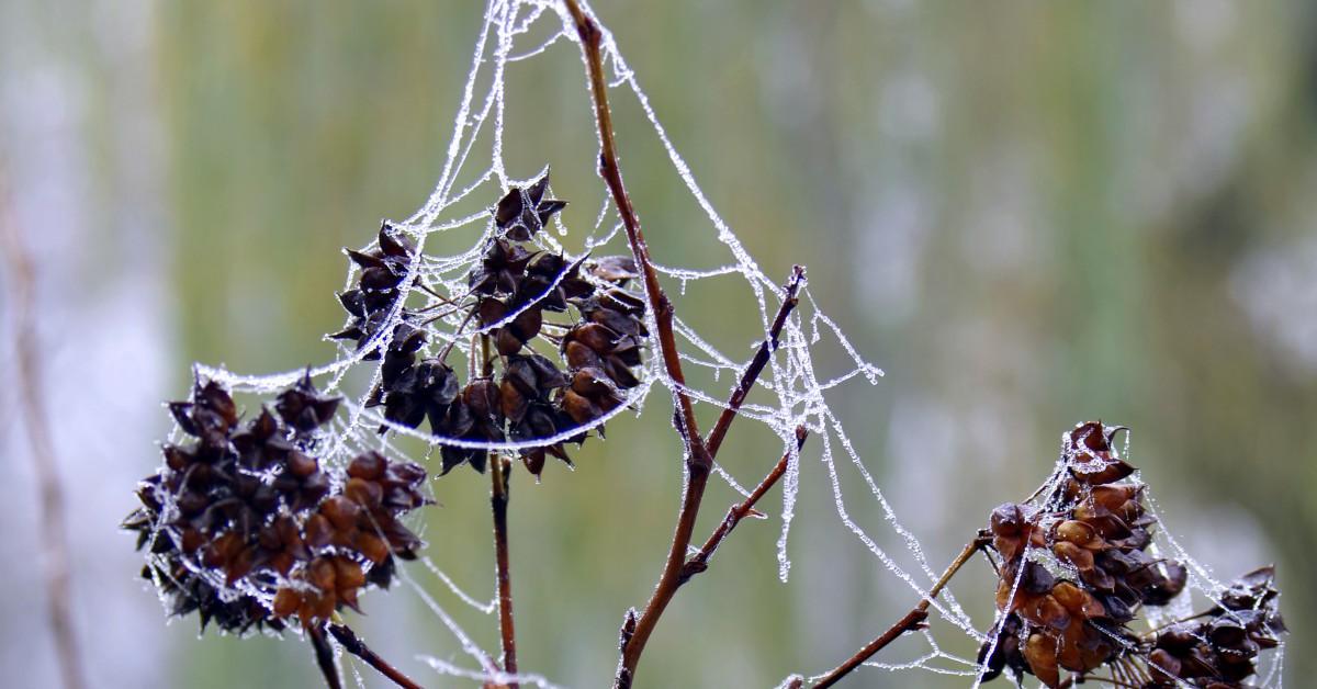 A növények is fáznak télen? - Bálint gazda tollából